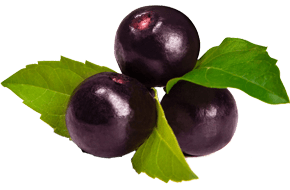 Bulk-Supply-Fruits_Acai