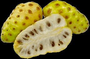 Bulk-Supply-Fruits_Noni